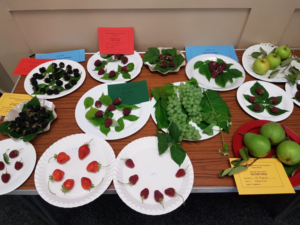Plate of 5 or more fruit