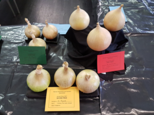 3 Onions from seeds
