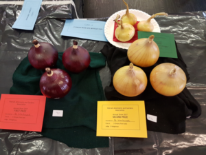 3 onions from sets